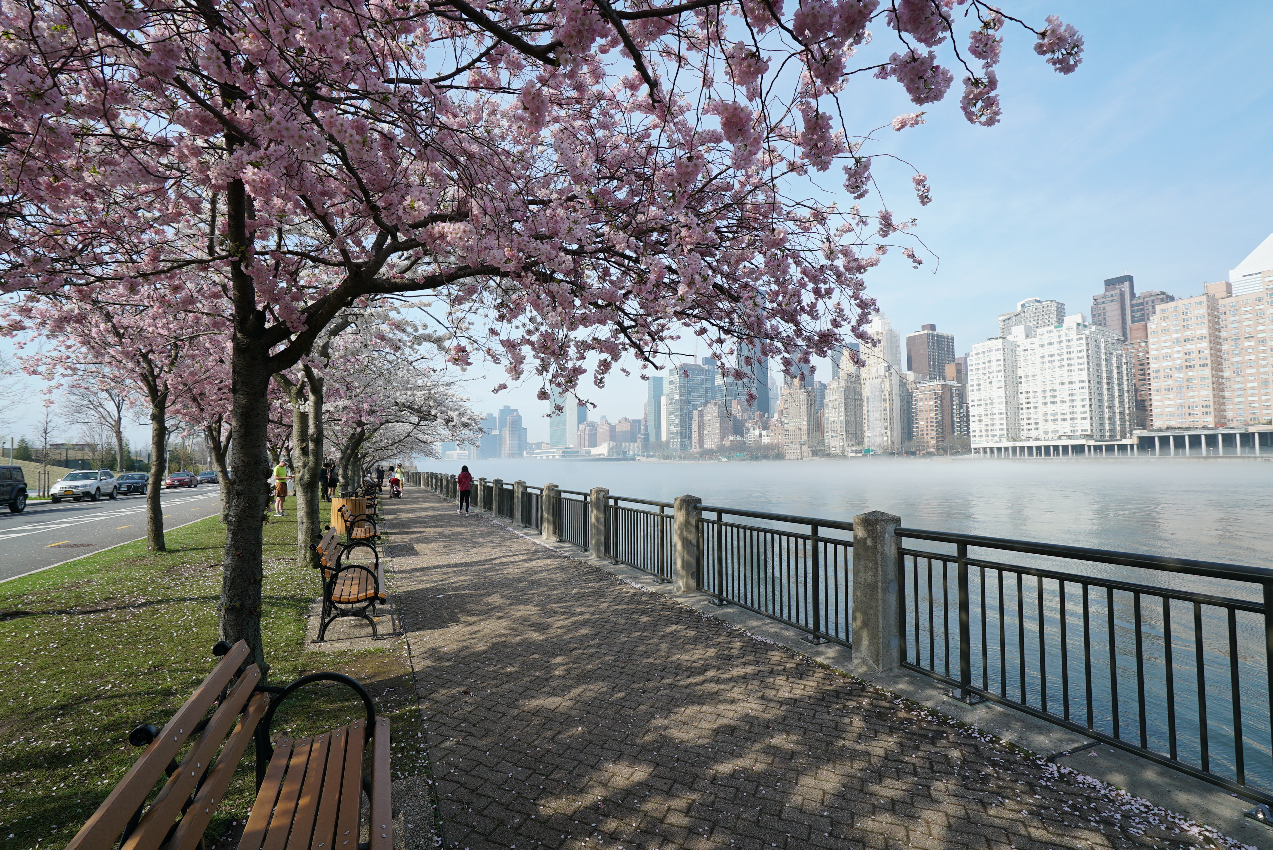 The Best Places To Catch The Blossoms This Season